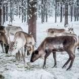 050118, Finland, Savukoski, Martti, Värriöjoki, Photo: Rostam Zandi.
