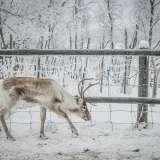 060114, Rensjön, Photo: © Rostam Zandi.