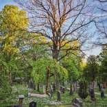 220517, Norra kyrkogården, Photo: Rostam Zandi.
