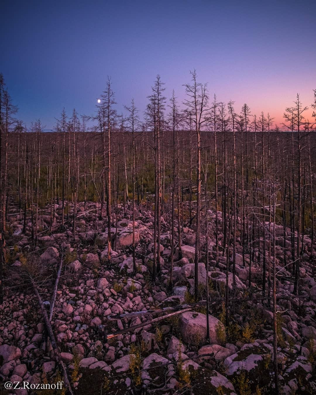 Hälleskogsbrännans Naturreservat